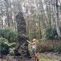 lava tree_05