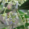 IMG_4463 fleur d'o