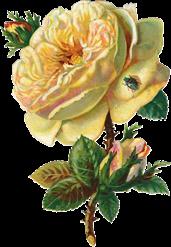 cajoline_vintageflowers3_7