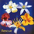 Une couvade de maladie ? / fleurs de bach : olive, rescue, crab apple, clematis