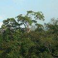 Forêt du Taman Negara_XRu