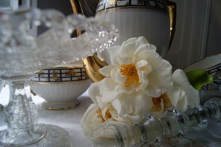 roses_022