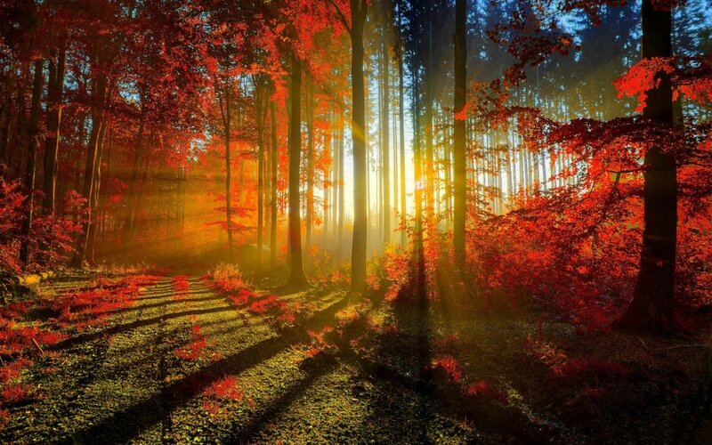 autumn_red_forest-wide