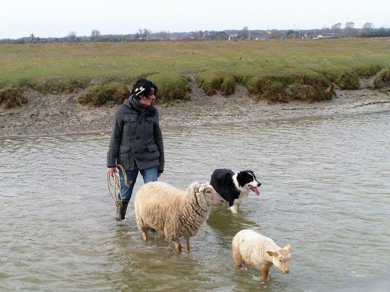 Stéphanie Maubet - éleveuse d'agneaux de prés-salés (31)