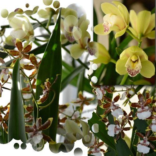 orchidée 2012 bis