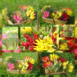 tulipes_3