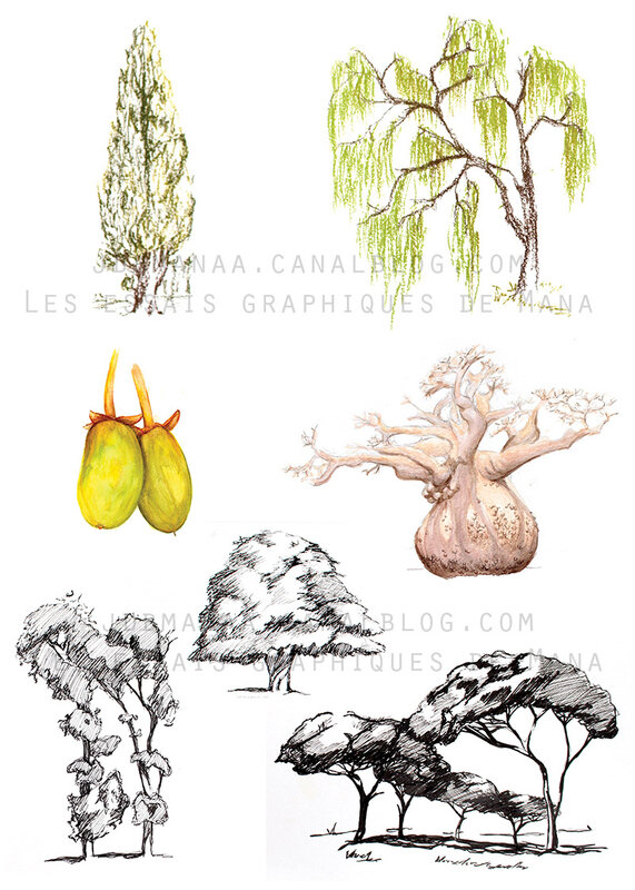 EXERCICES-ARBRES800