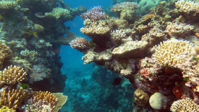 Grande-Barrière-corail-meilleur-dix-plongee-monde