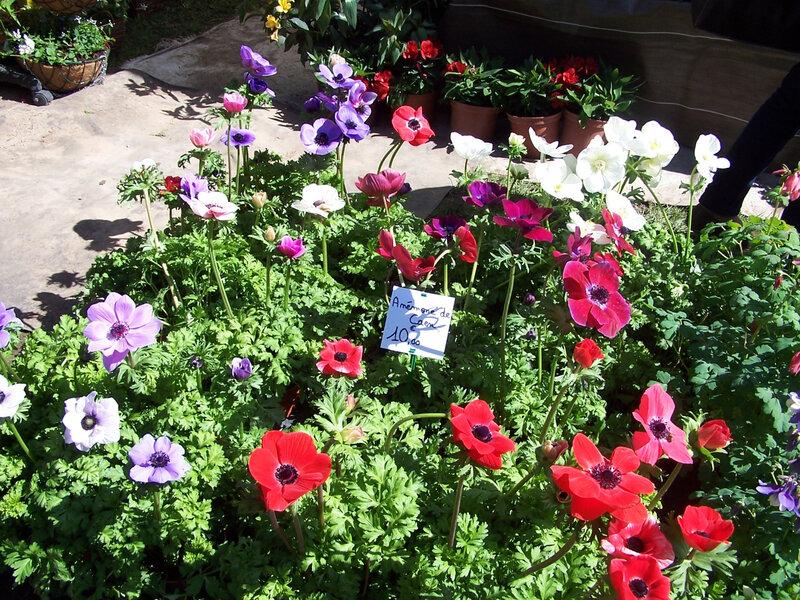 jardin beauregard 021