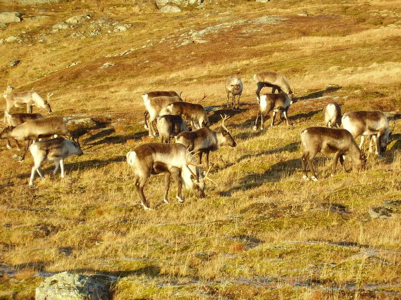 17-10-08 Sortie Montagne et rennes (126)