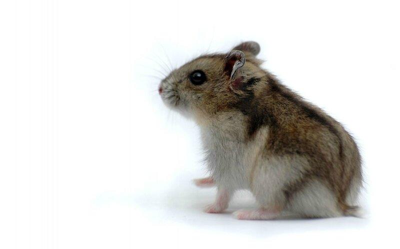 hamster_22