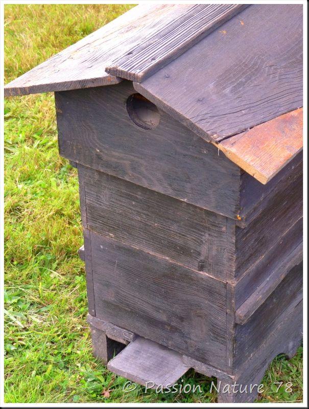 Les abeilles (14)