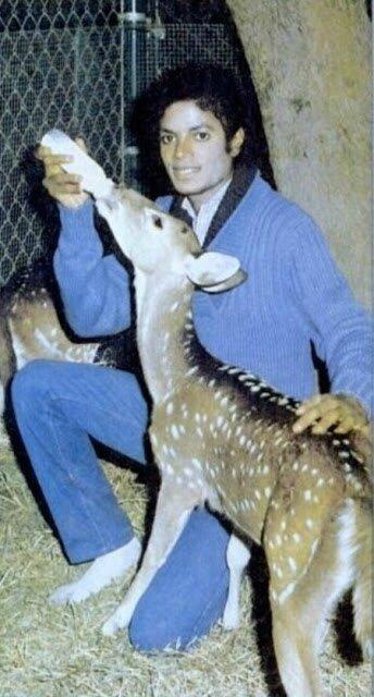 MJ-Bottle-Feeding-Deer-In-His-Socks-michael-jackson-10638199-450-836