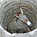 L'âne au fond du puits...