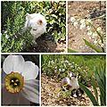 Fleurs mai 2013 (13)