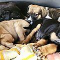 fratrie de 7 chiots abandonnés sur Pliane