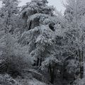 2009 12 17 La neige et la nature (17)