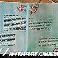 Signe (2)
