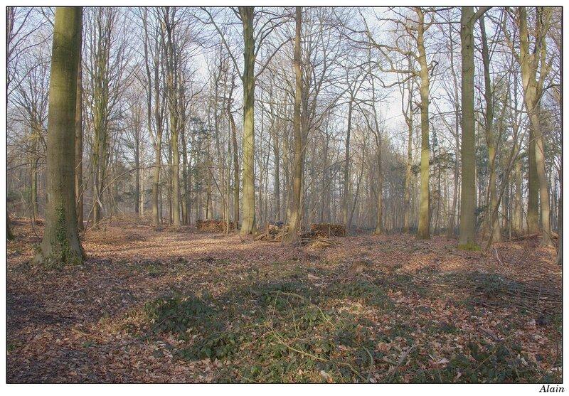 le printemps est encore discret dans les bois