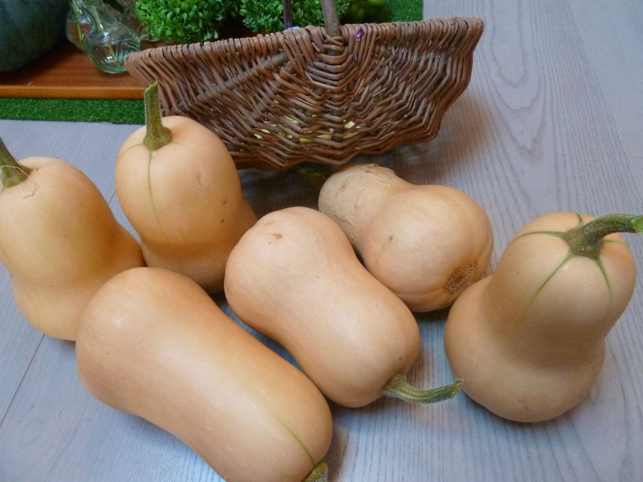courges butternut - www.passionpotager.canalblog.com