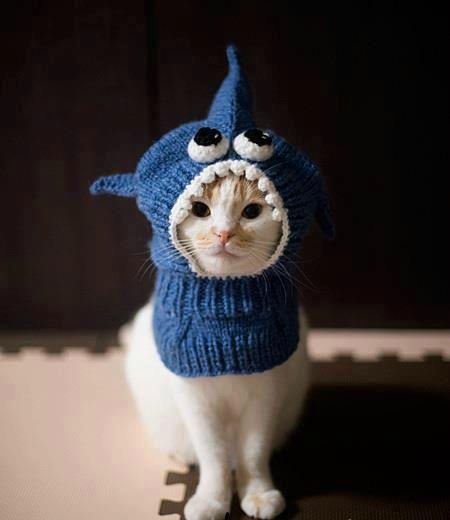 Bonnet pour chat