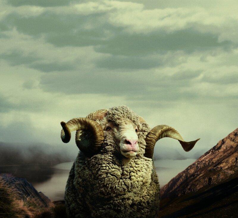 icebreaker_merino_sheep_cmyk