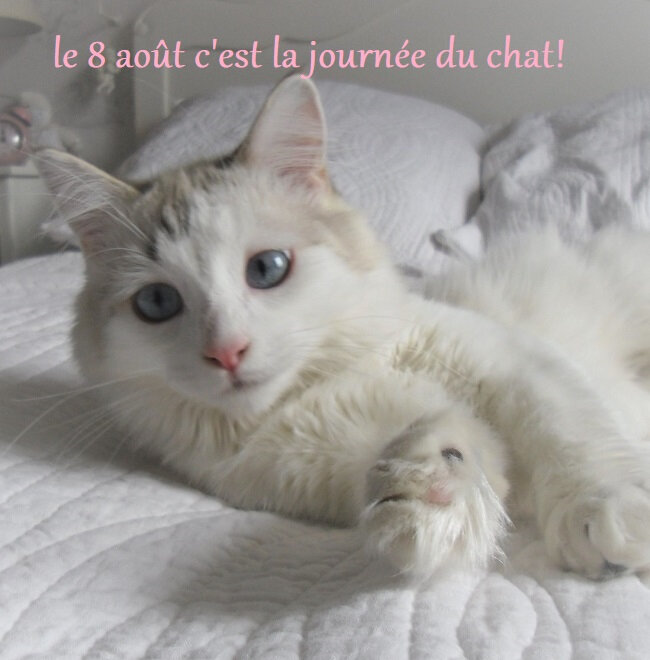 chat 1