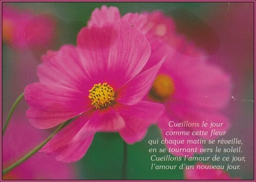 Citation Cueillons Le Jour Comme Cette Fleur Mosaiques De