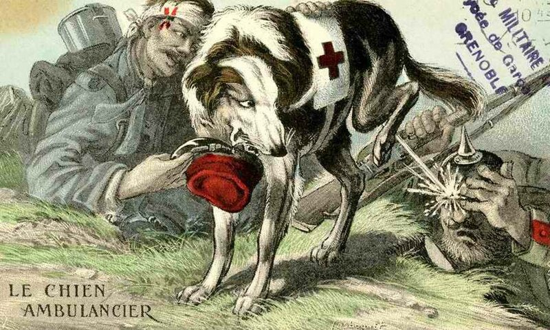 Le chien ambulancier