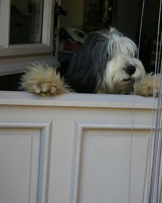 bali veut sortir