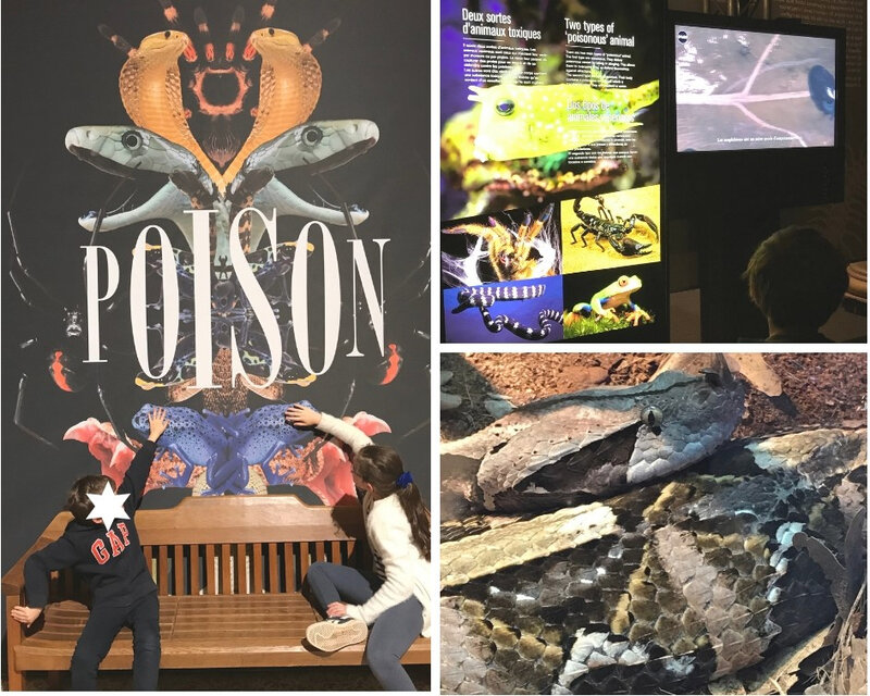 Poison l'exposition ©Kid Friendly