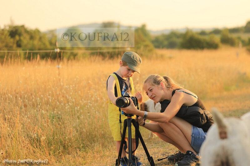 Photos JMP©Koufra 12 - Cornus - Moisson à l'ancienne - 22072019 - 0325