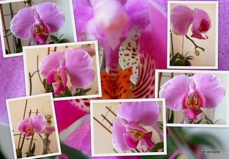 orchid_es5_1