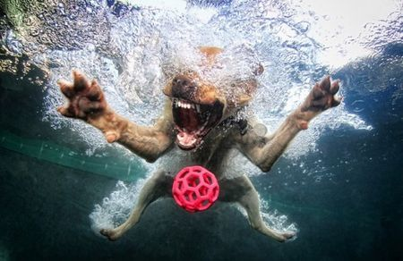 diving_dogs_photography11_550x357