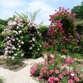 Roseraie Haÿ- les- Roses (20)