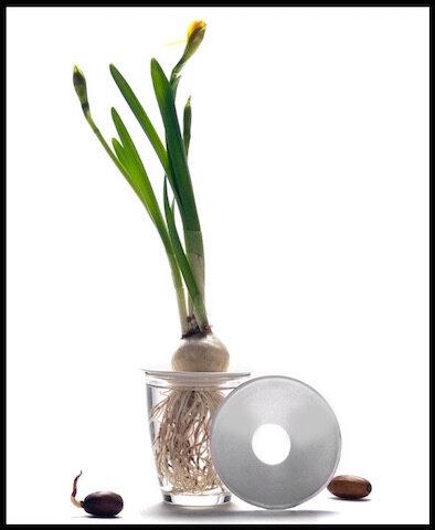 design sprout 5 l