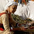 La ceuilleuse de simples : Herbes sauvages à manger, soigner ou