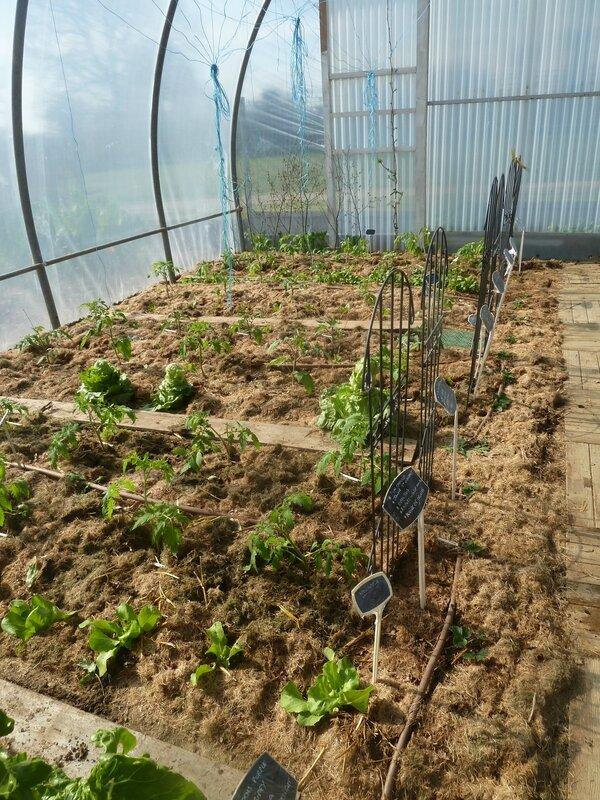 1-serre et tomates plantées (2)