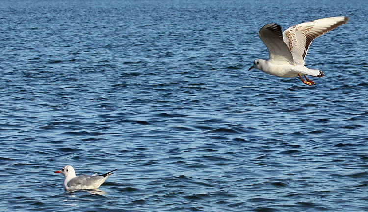 Mouettes_IMG_3490