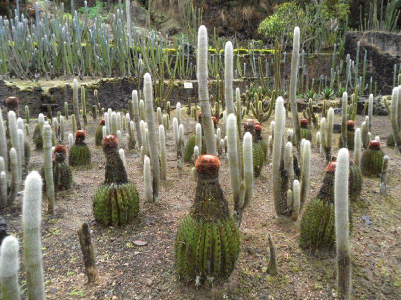 Collection de cactus au jardin LATOUCHE au Carbet