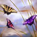 Butterfly (51)