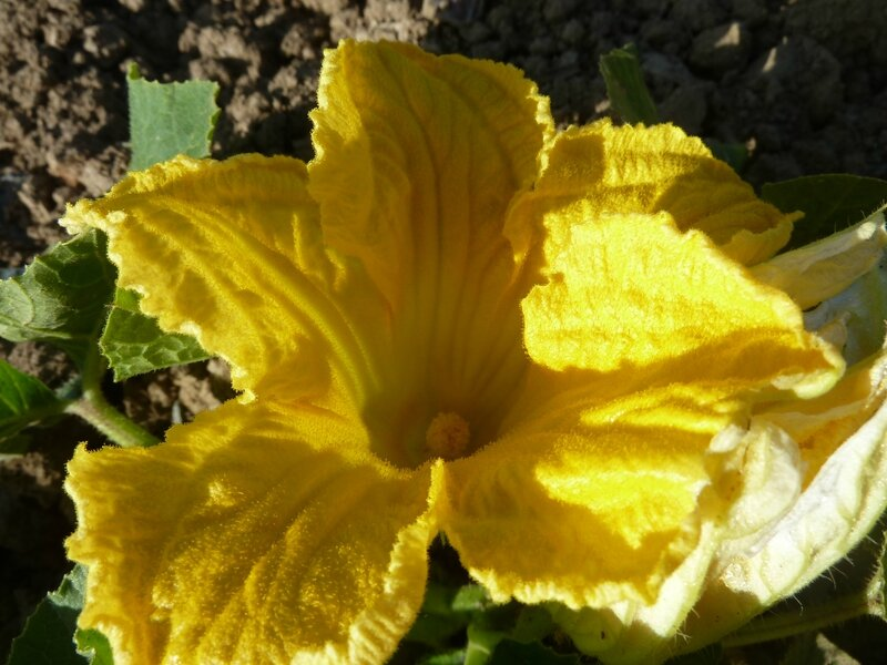 01-courges (2)