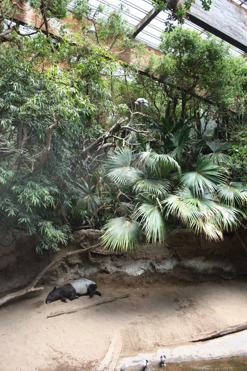 J11 - 08 juillet 2014 - zoo du Bronx (131).JPG