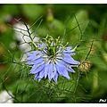 Fleurs de mon jardin 29