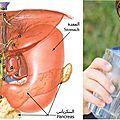حكمة شرب الماء على ثلاث مرات