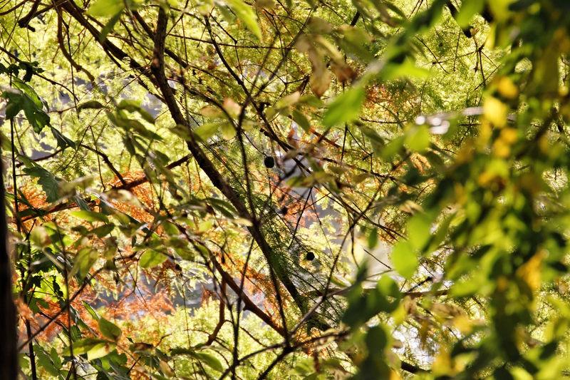 Bois_de_Boulogne_automne__18_