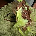bouquet mariage orchidee marron et plumes anis