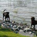 Duck et Buddy