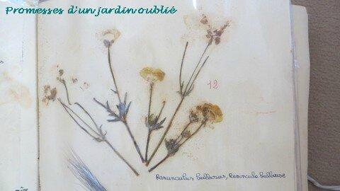 19 herbier