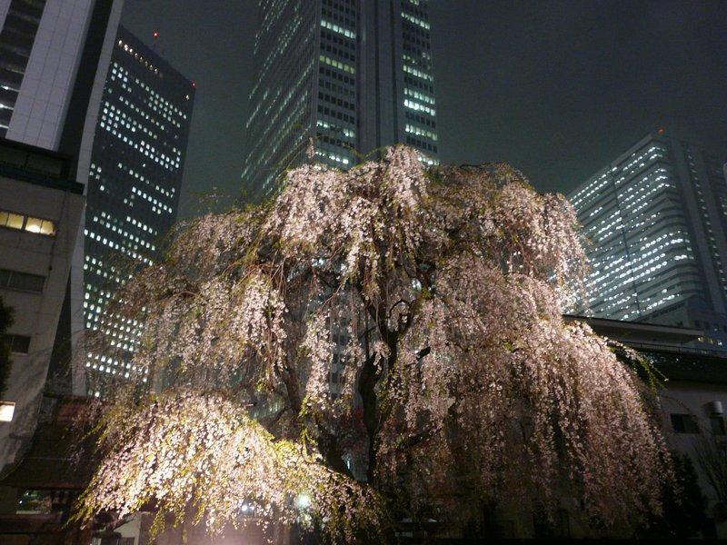 Canalblog Tokyo Cerisier 2010 Shinjuku Nuit Buildings01